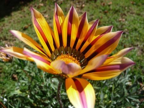 En av de mange vakre blomstene i bestemors hage.