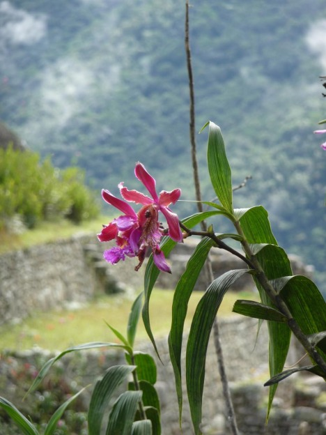 I og rundt byen er det masse flott planter, blant annet disse orkideene.